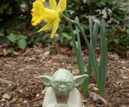 279 – May the spring be with you