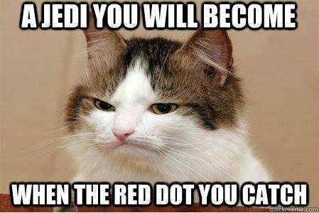 275 – Koty, koty, wszędzie koty!