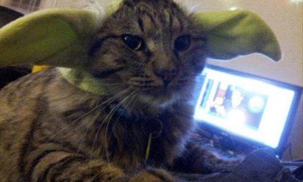 281 – Yoda, you seek Yoda