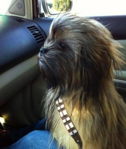245 – Chewie, aport